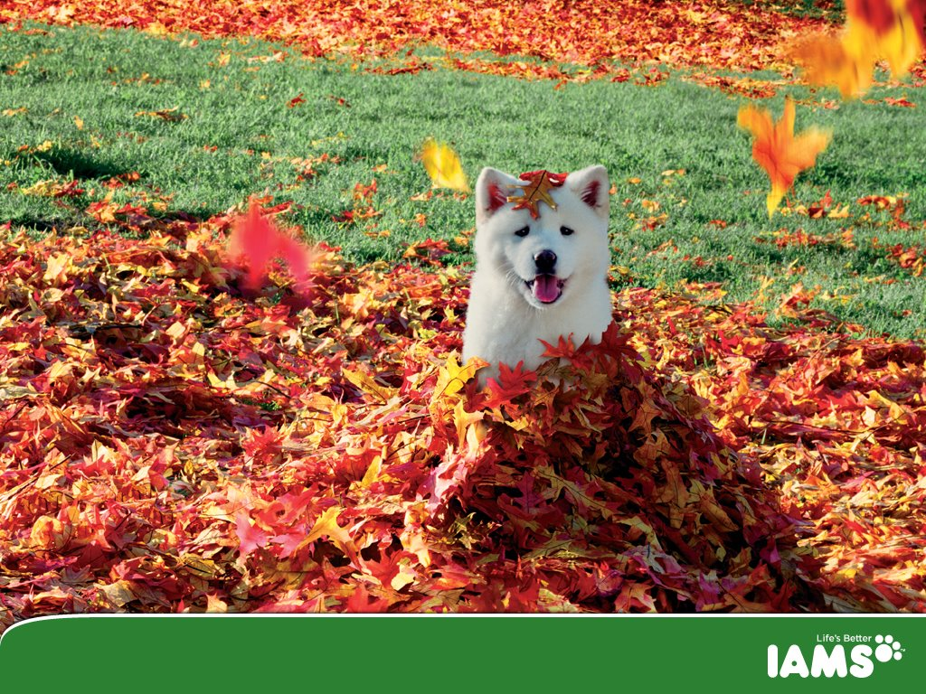 Nature Wallpaper: Dog