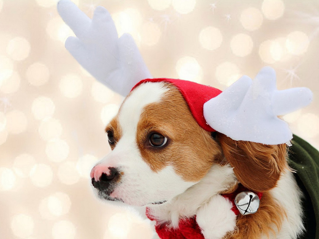 Nature Wallpaper: Dog - Christmas