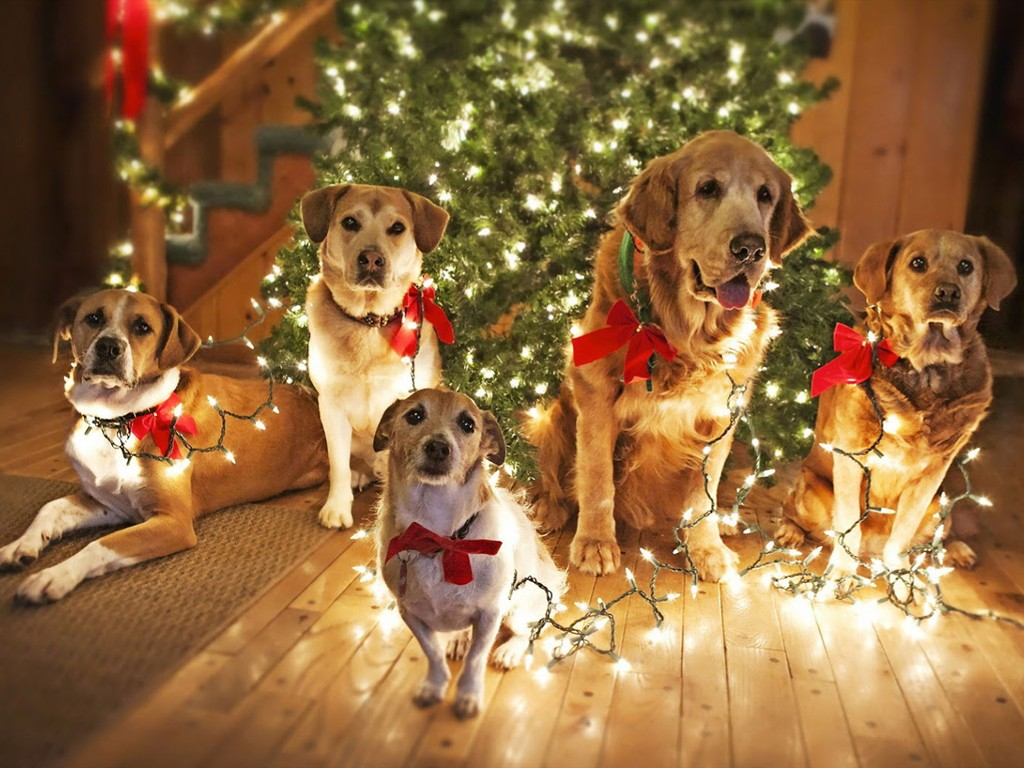 Nature Wallpaper: Dogs - Christmas Lights