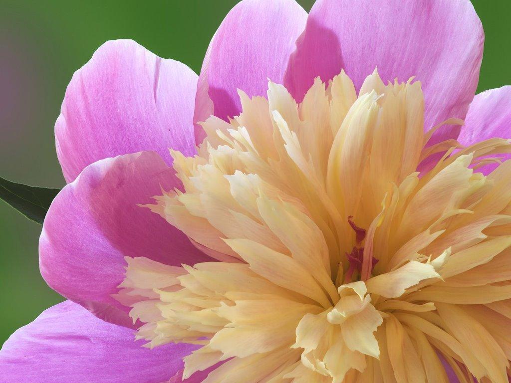 Nature Wallpaper: Flower