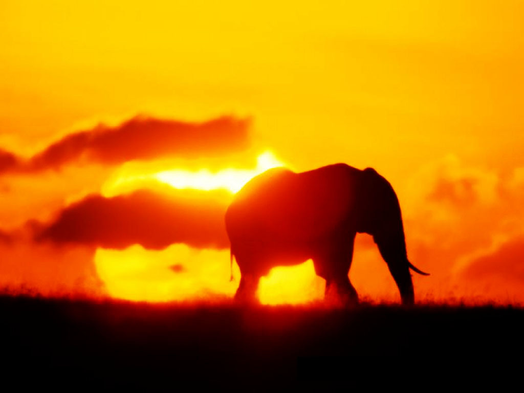 Nature Wallpaper: Elephant - Sunset