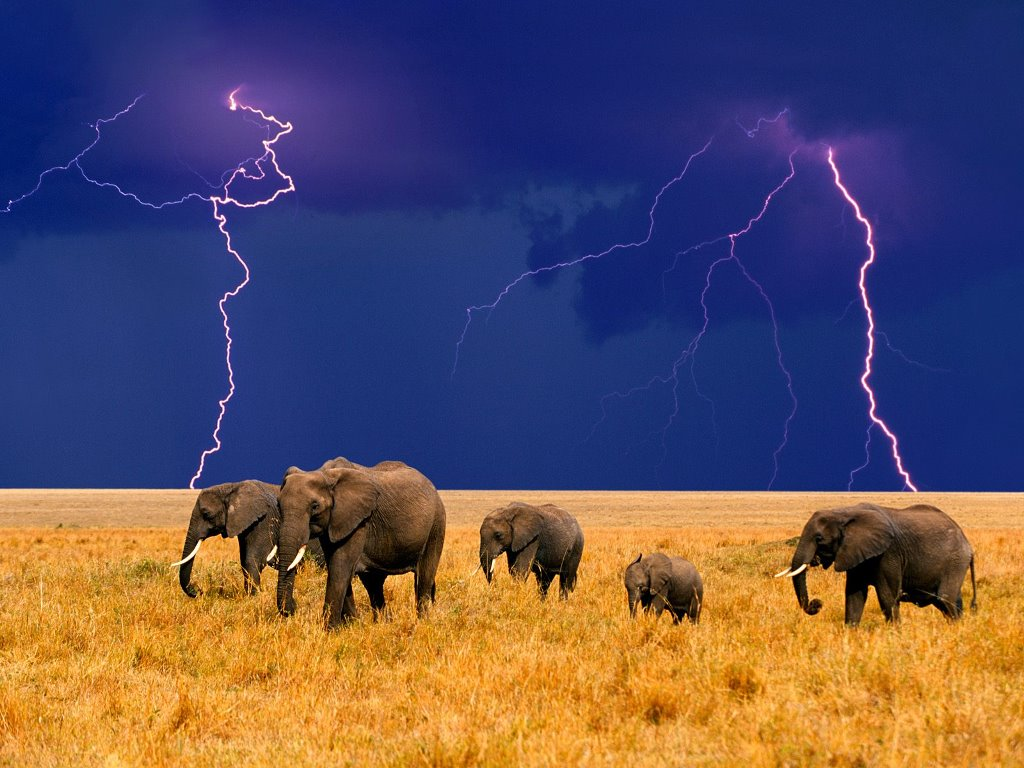 Nature Wallpaper: Elephants - Approaching Storm