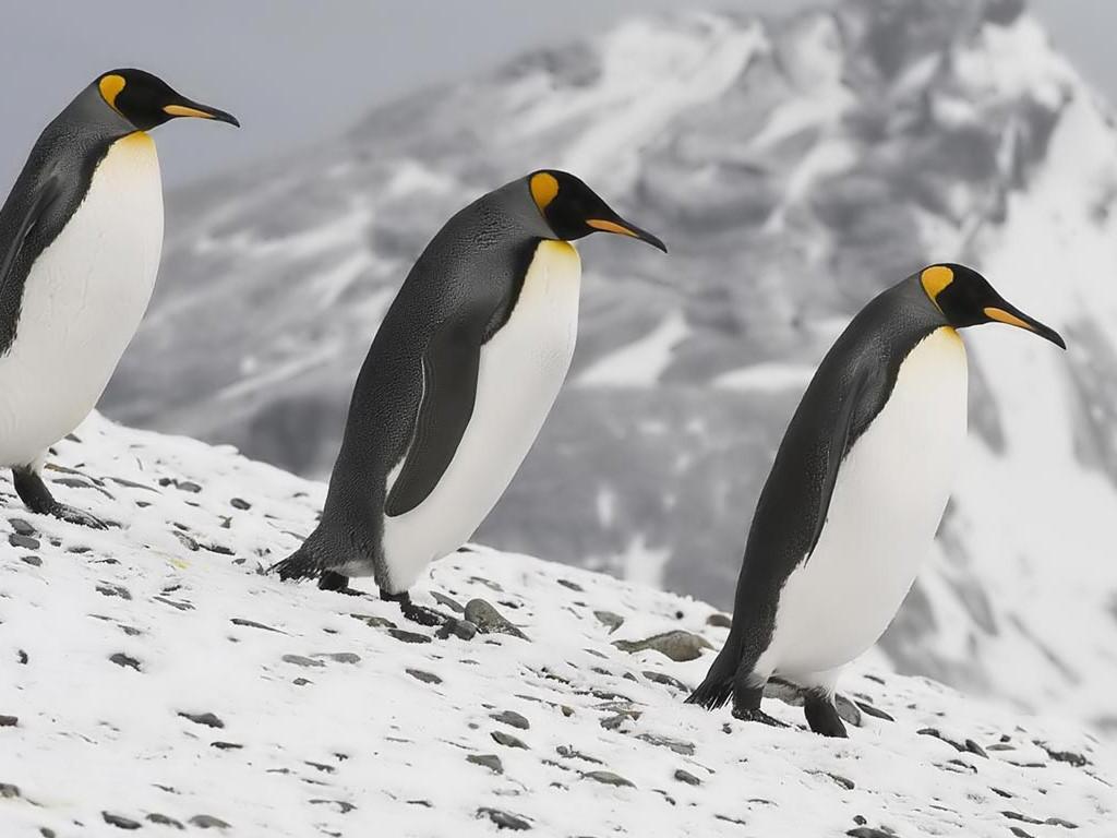 Nature Wallpaper: Emperor Penguins