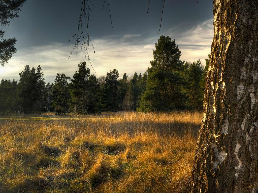 Nature Wallpaper: European Forest