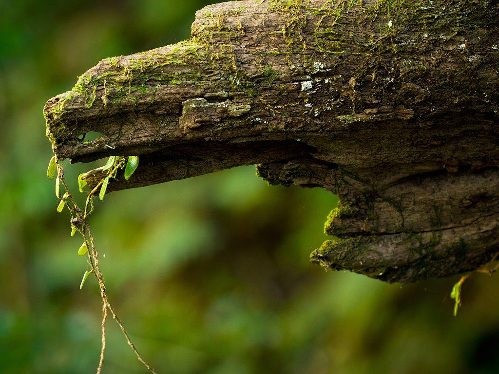 Nature Wallpaper: Fallen Tree