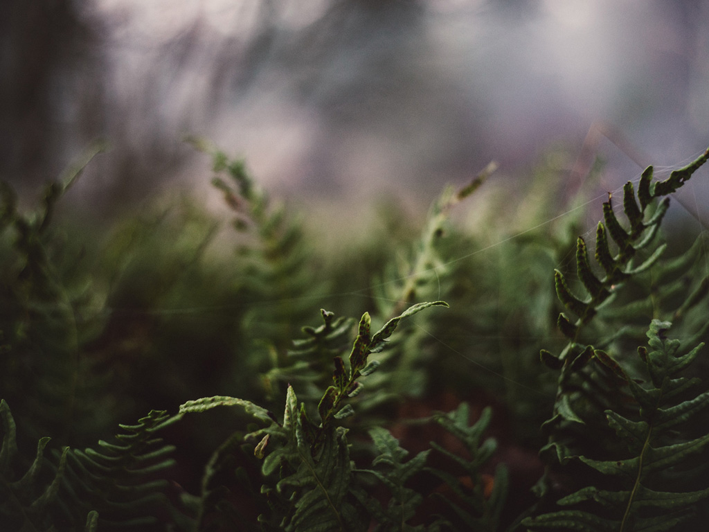 Nature Wallpaper: Fern and Spiderwebs
