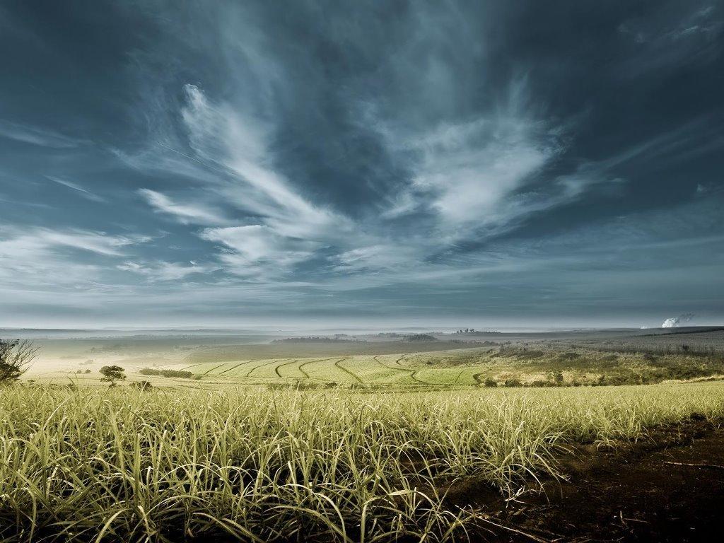 Nature Wallpaper: Fertile Fields