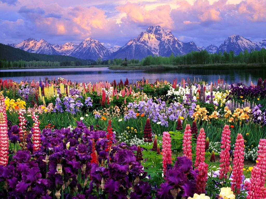 Nature Wallpaper: Field of Flowers