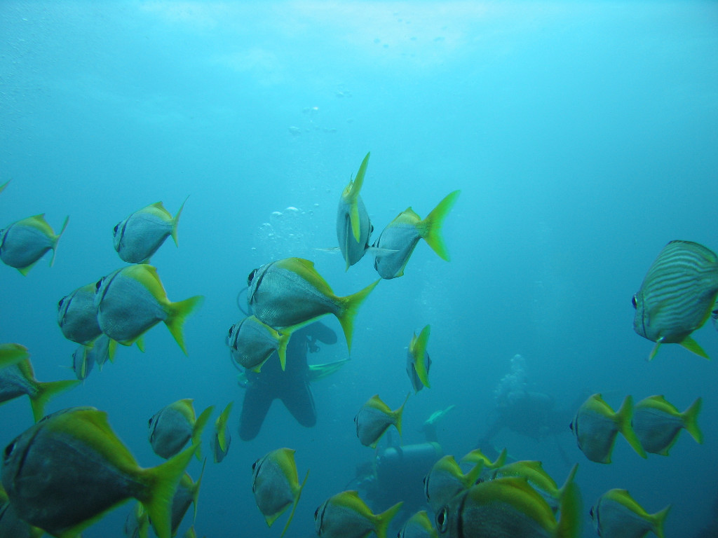 Nature Wallpaper: Fishes