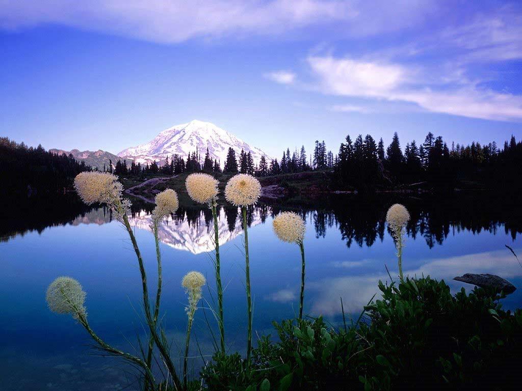 Nature Wallpaper: Flowers