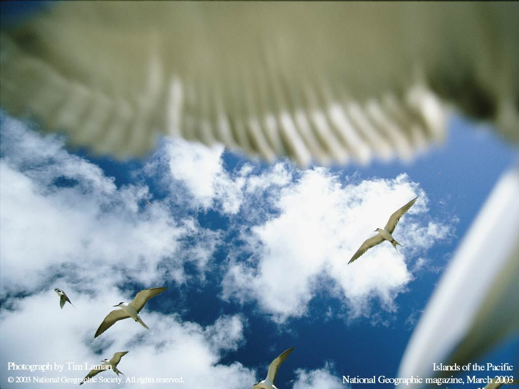 Nature Wallpaper: Flock of Seagulls