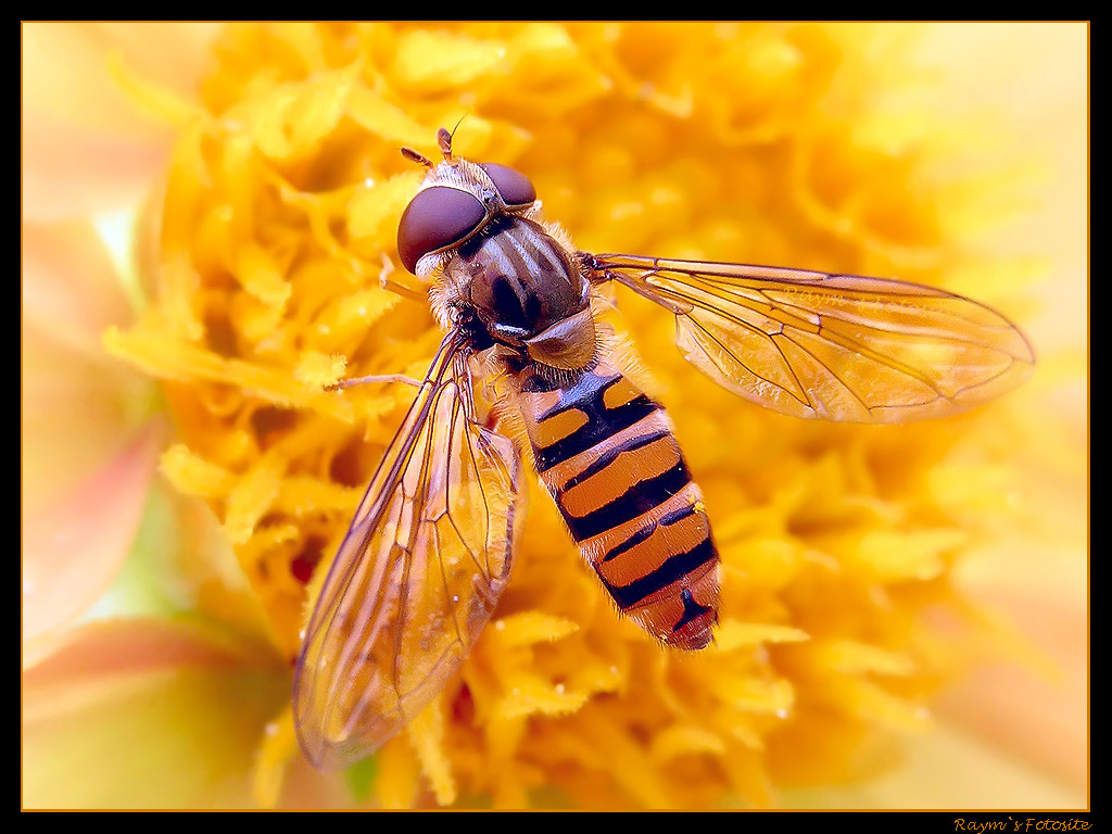 Nature Wallpaper: Fly