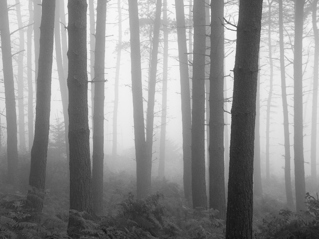 Nature Wallpaper: Foggy Forest