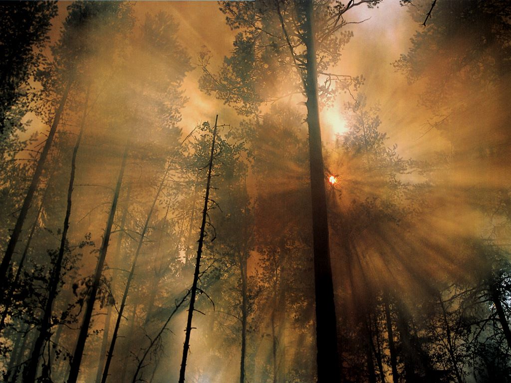 Nature Wallpaper: Forest Fire - The Day After