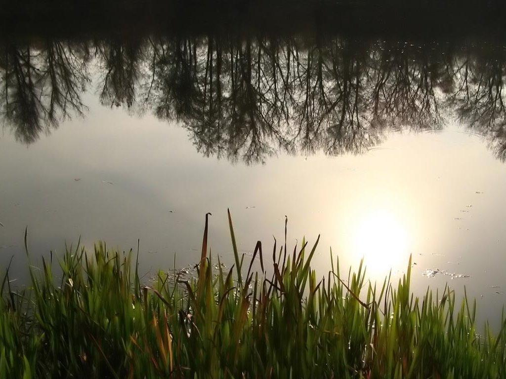Nature Wallpaper: Forest Pond