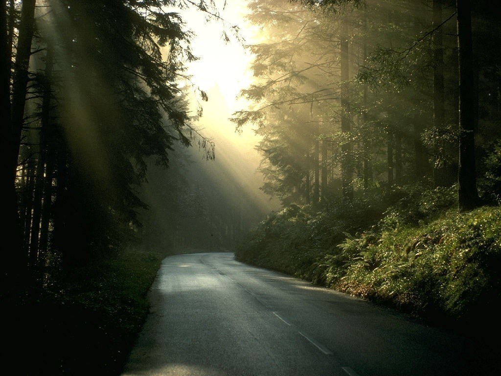 Nature Wallpaper: Forest - Road