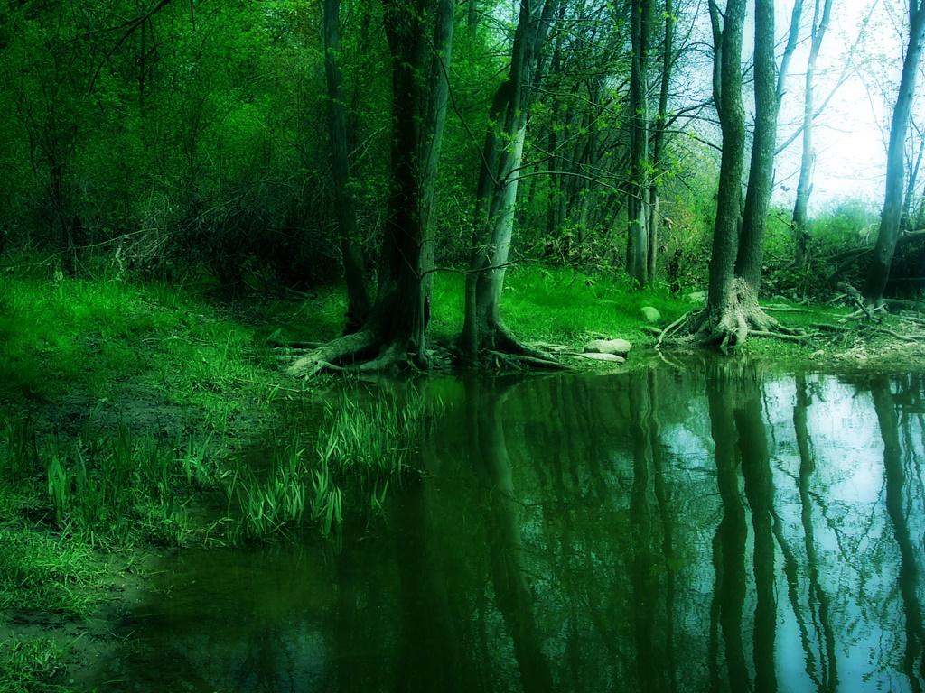 Nature Wallpaper: Forever Green