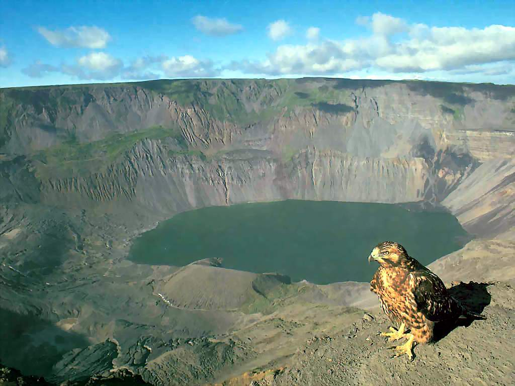 Nature Wallpaper:  Galapagos Hawk and Volcanic Caldera