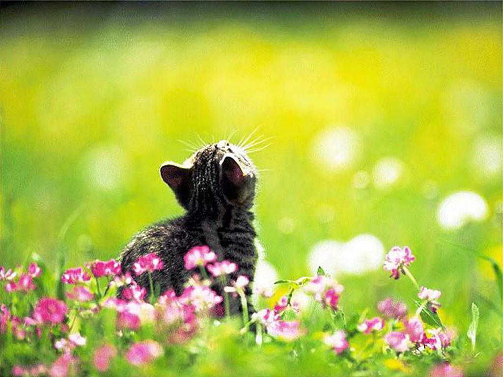 Nature Wallpaper: Garden Kitten