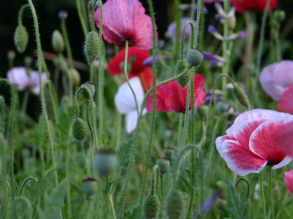 Nature Wallpaper:  Garden of Flowers