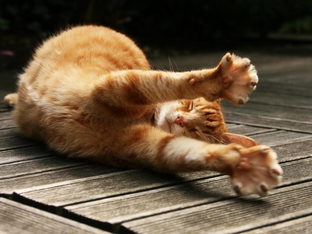 Nature Wallpaper: Ginger Cat