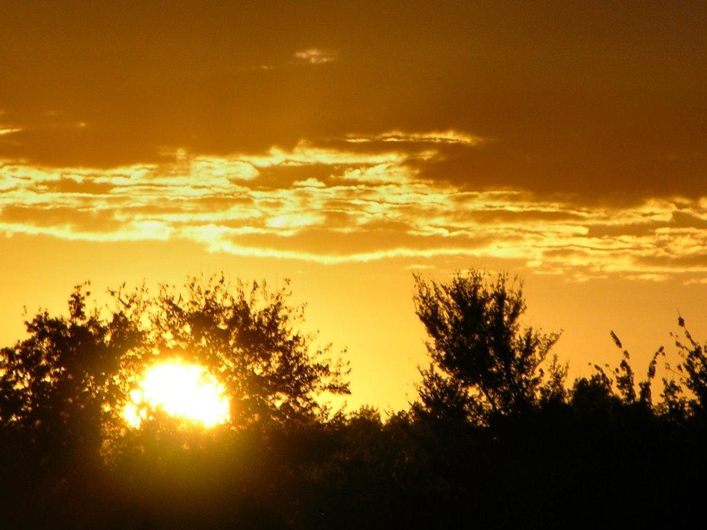 Nature Wallpaper: Gold Sunset