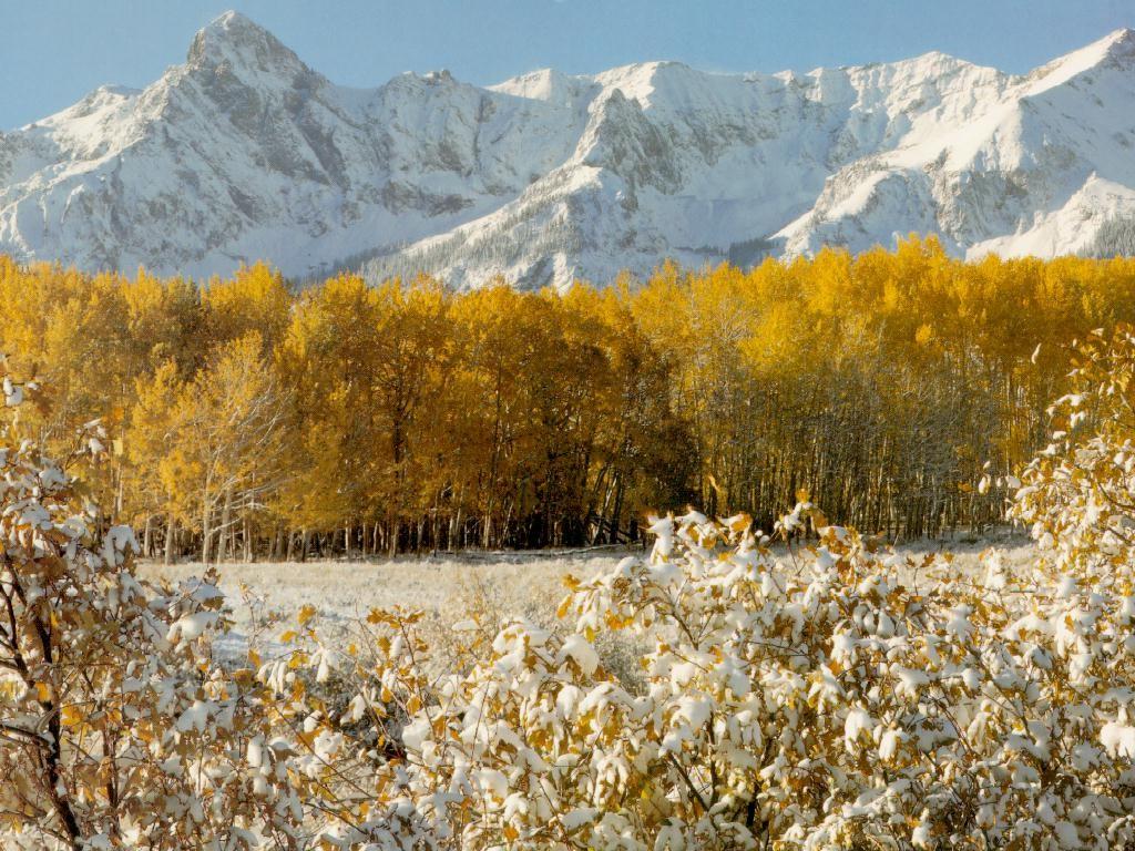 Nature Wallpaper: Golden Landscape
