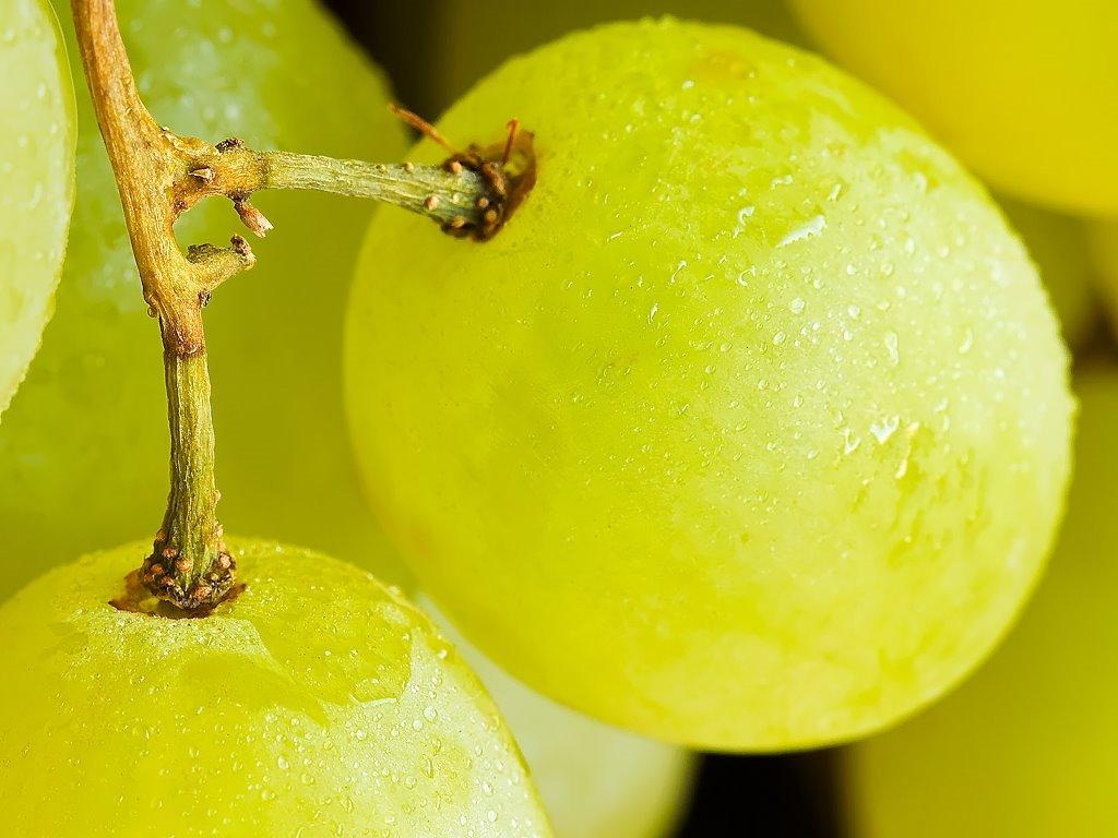 Nature Wallpaper: Grapes