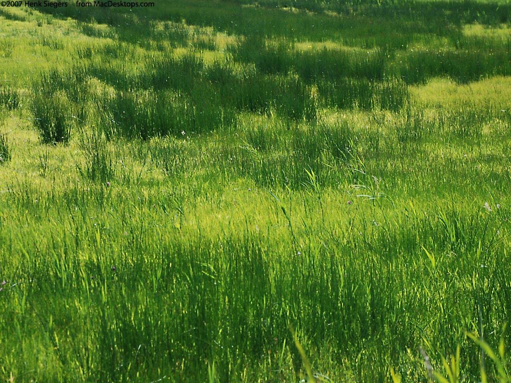 Nature Wallpaper: Grass
