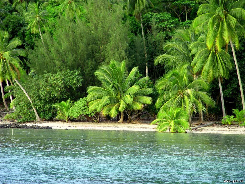 Nature Wallpaper: Green Beach