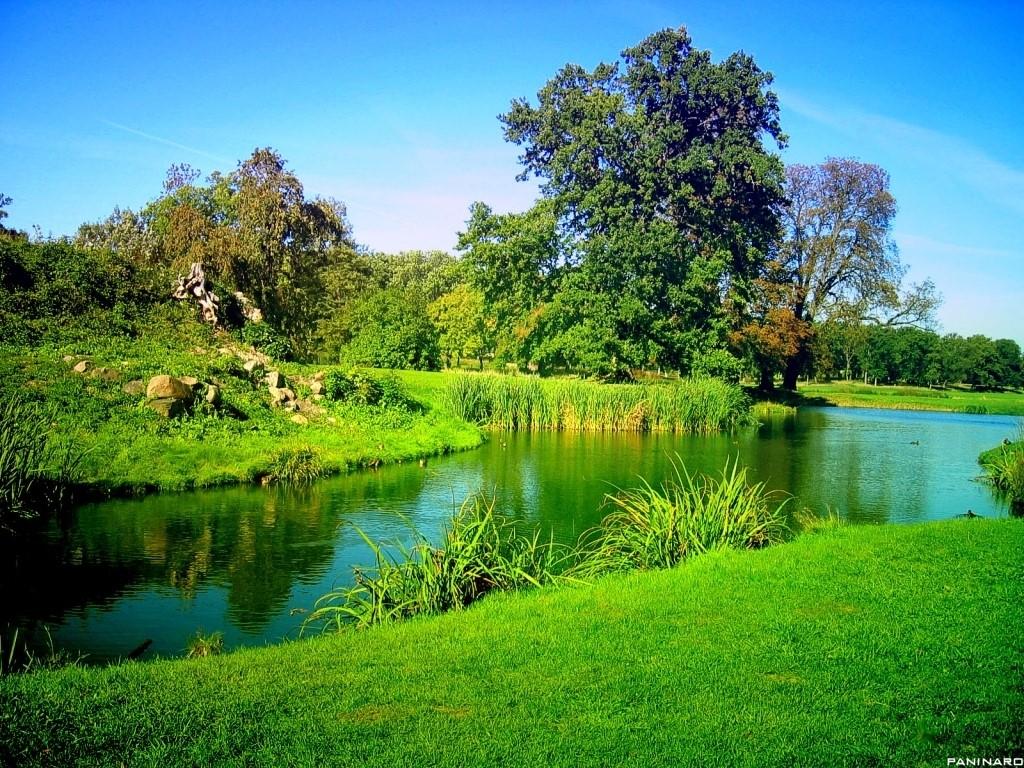 Nature Wallpaper: Green Garden