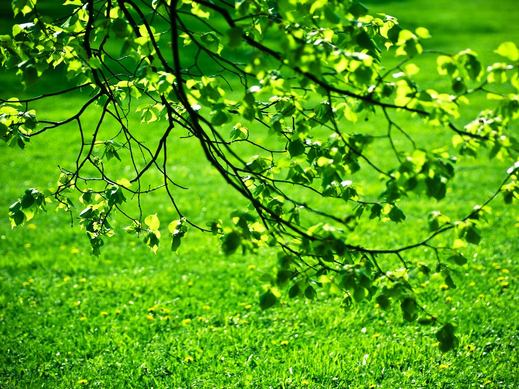 Nature Wallpaper: Green Leaves