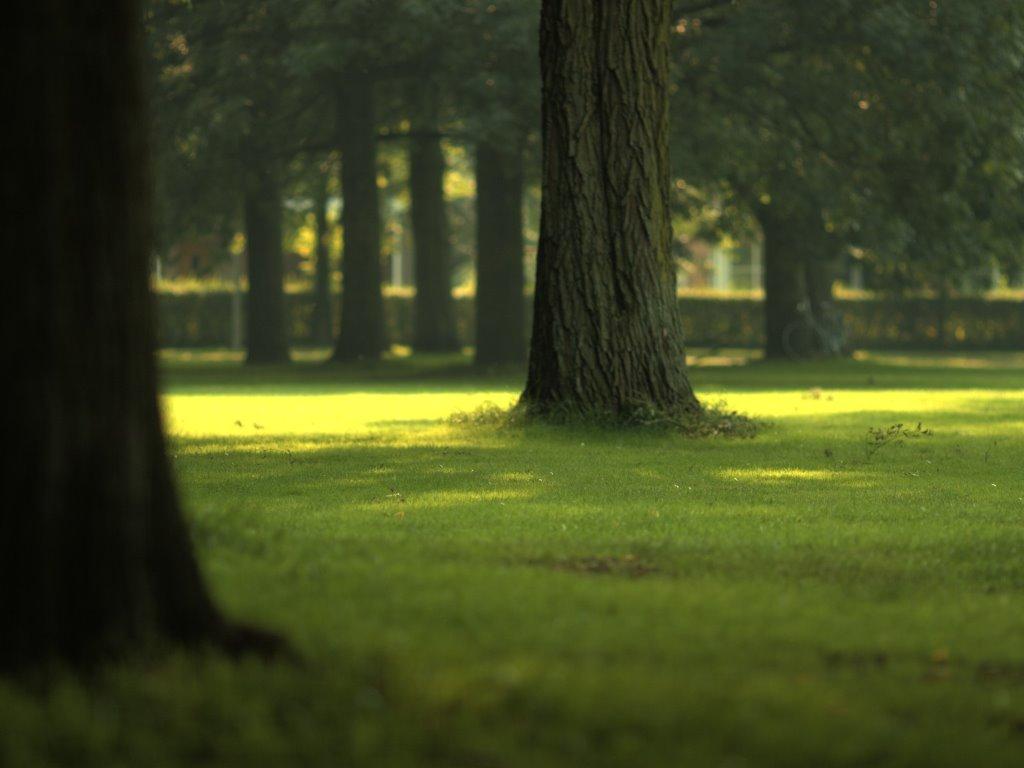 Nature Wallpaper: Green Park