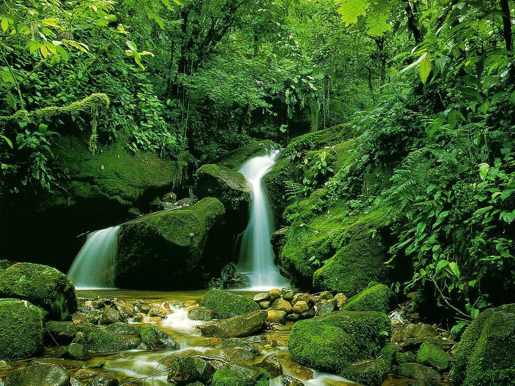 Nature Wallpaper: Green River