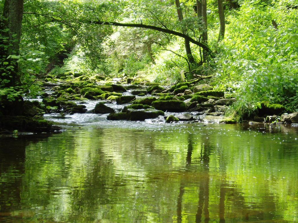 Nature Wallpaper: Green Stream