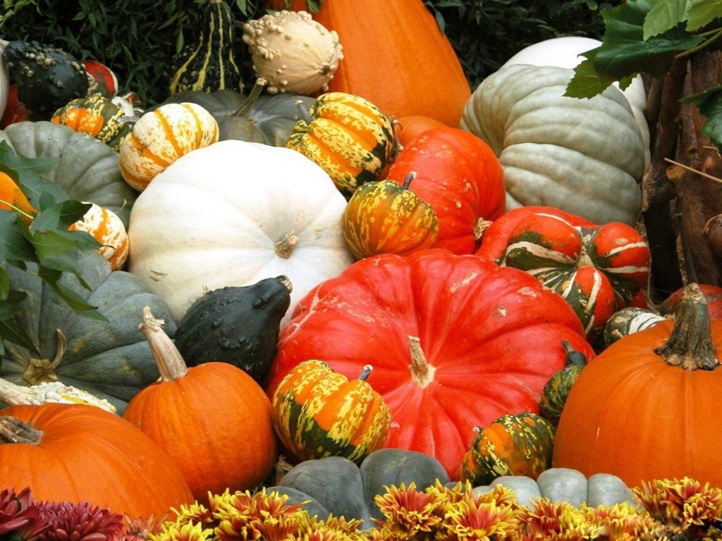 Nature Wallpaper: Halloween Pumpkin Festival