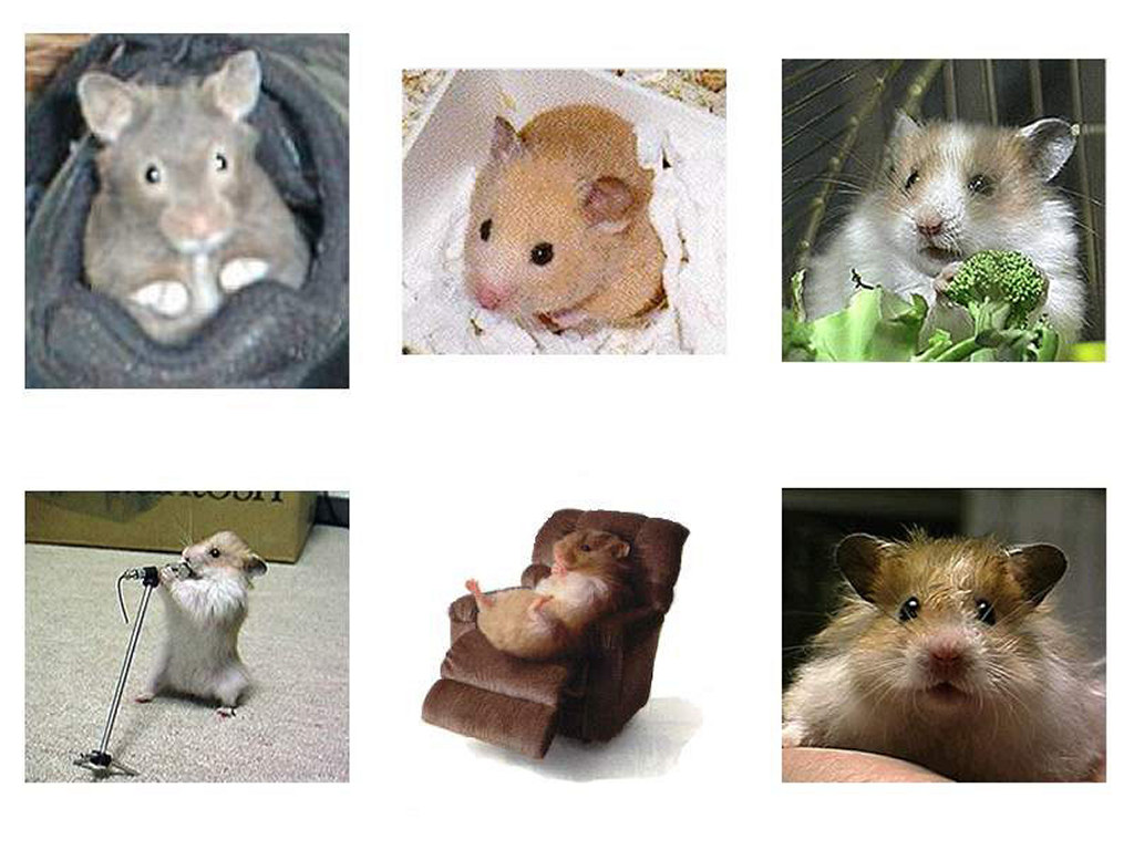 Nature Wallpaper: Hamster Collage
