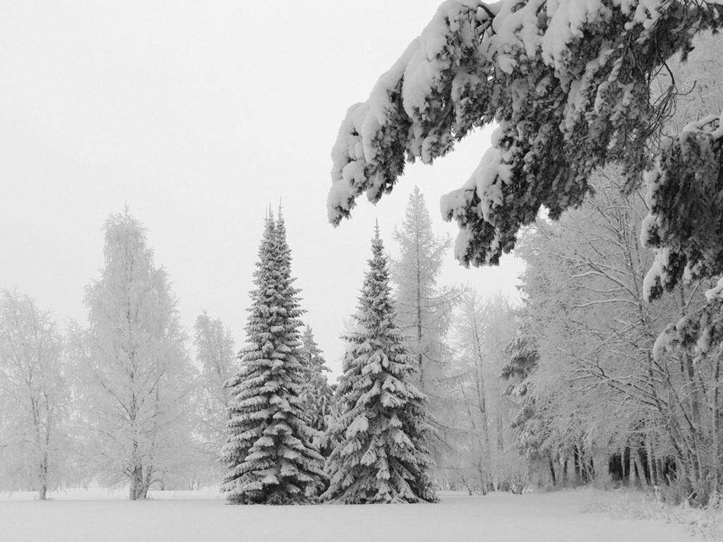 Nature Wallpaper: Hard Winter
