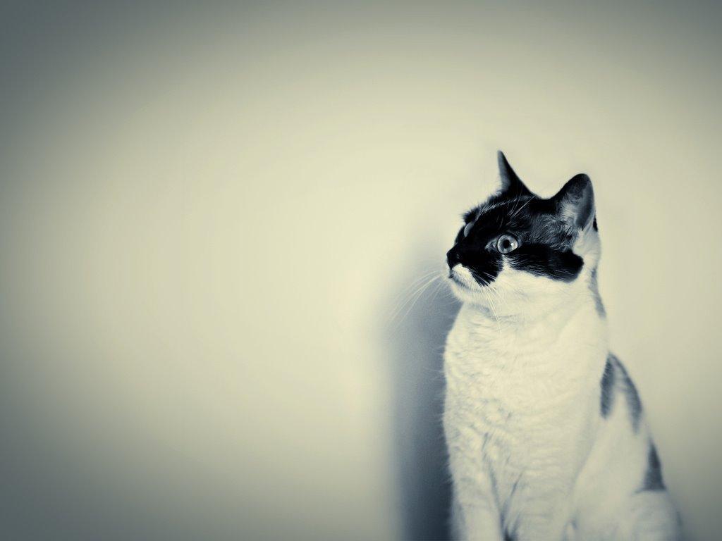 Nature Wallpaper: Hipster Cat