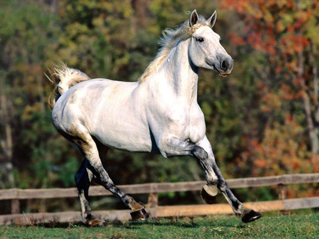 Nature Wallpaper: Horse