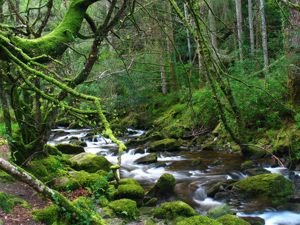 Nature Wallpaper: Inner Forest River