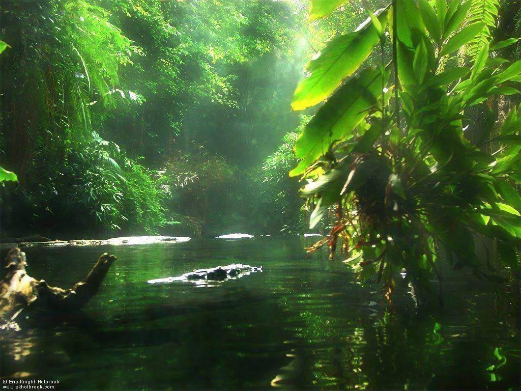 Nature Wallpaper: Jungle