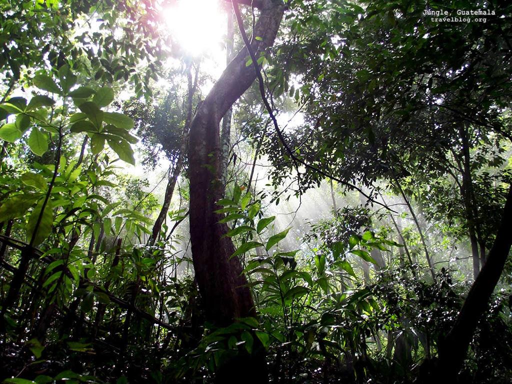 Nature Wallpaper: Jungle - Guatemala