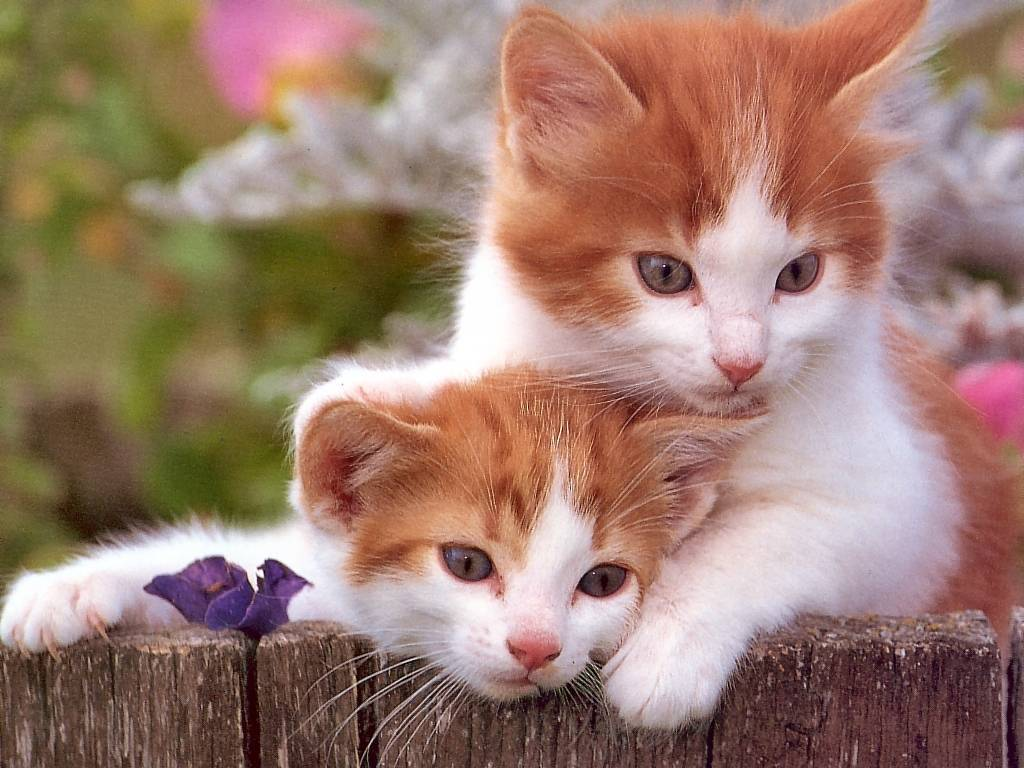 Nature Wallpaper: Kitten