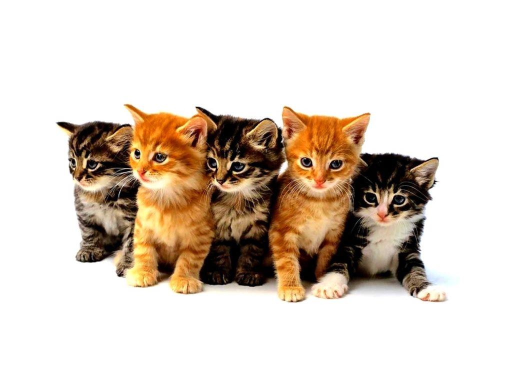 Nature Wallpaper: Kittens