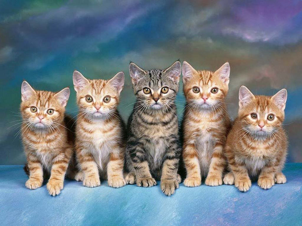 Nature Wallpaper: Kittens