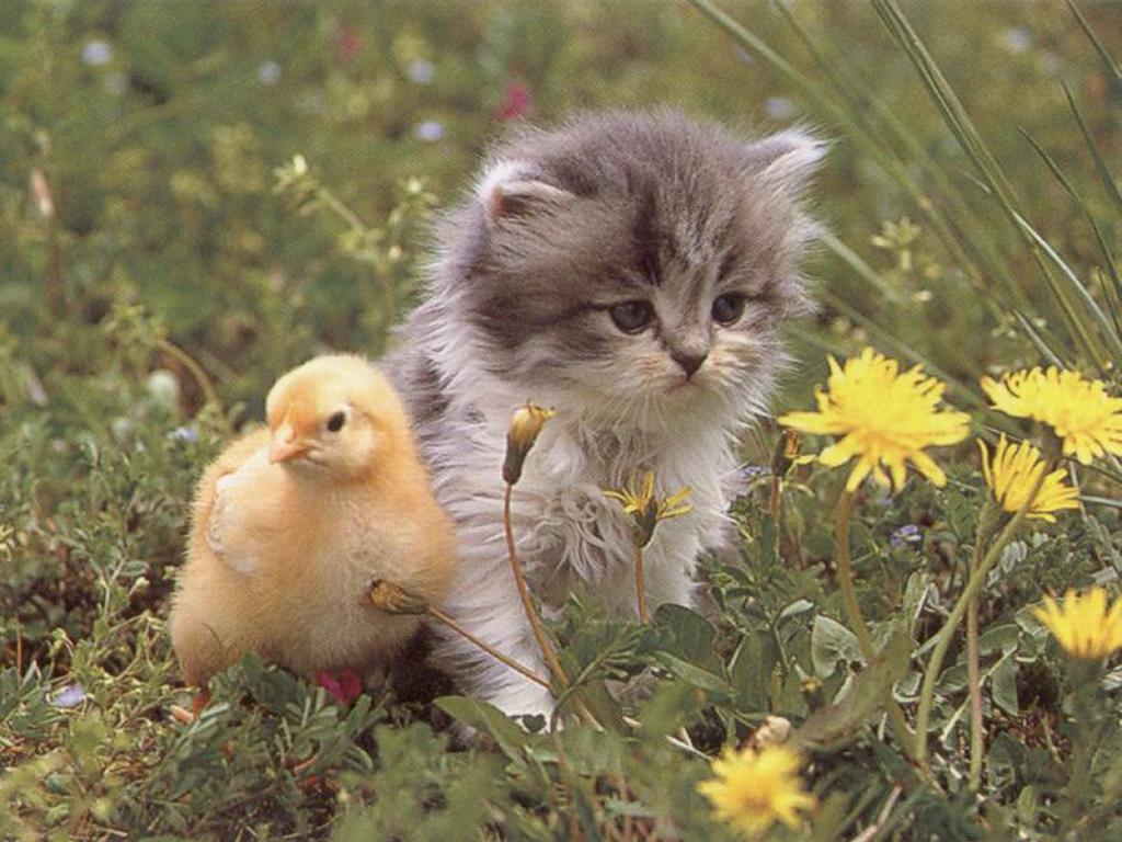 Nature Wallpaper: Kitty and Little Bird