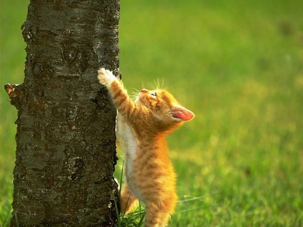Nature Wallpaper: Kitty and Tree