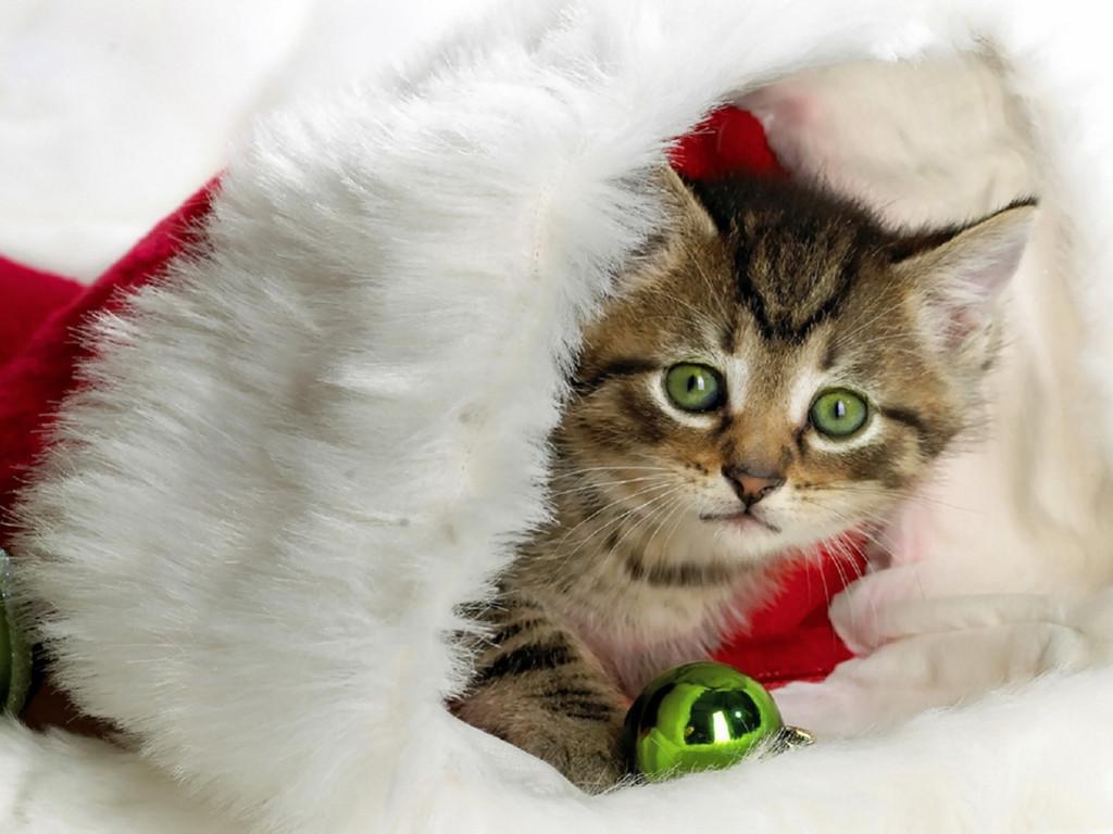 Nature Wallpaper: Kitty - Christmas