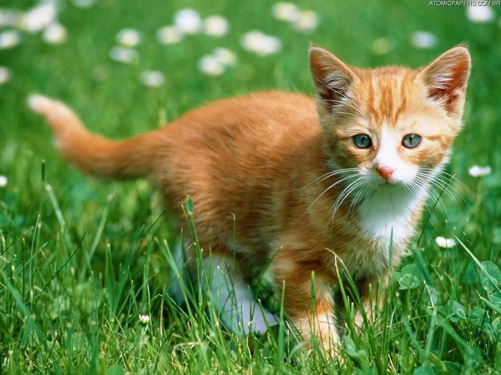 Nature Wallpaper: Kitty